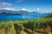 Summerhill-Estate-Winery-51-1024x680
